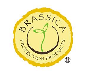 Logo for Brassica